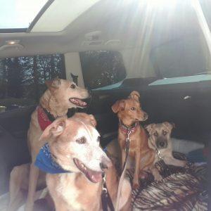 Timmy, Nela, Paula und Zuri im IO20 ! Dem Dogy-Mobil von iomio :)